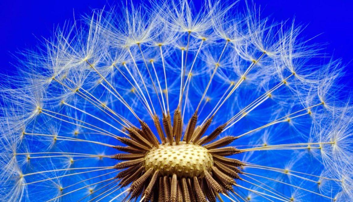 nature-3092555_1280